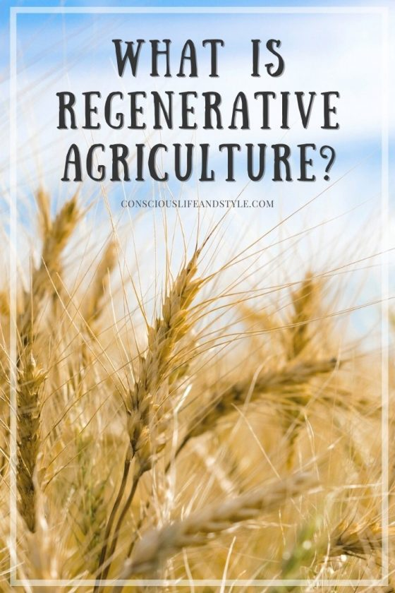 What is Regenerative Agriculture - Conscious Life and Style