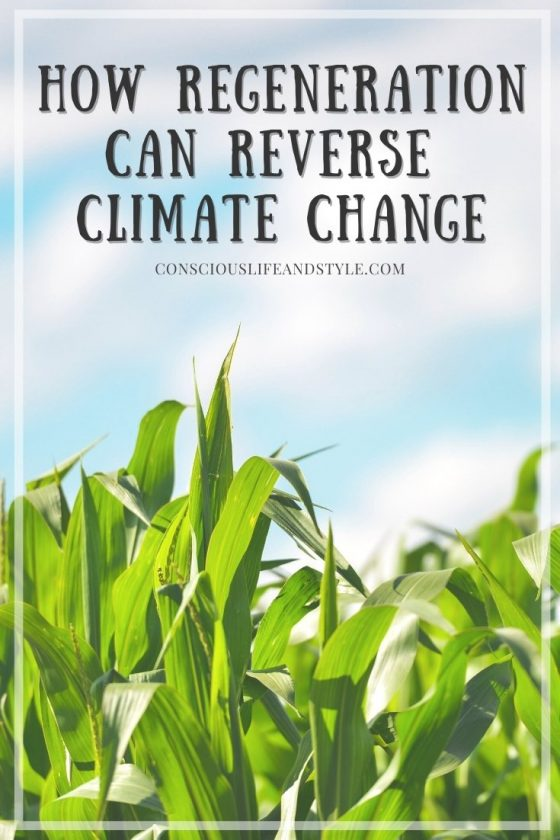 How Regeneration Can Reverse Climate Change - Conscious Life and Style