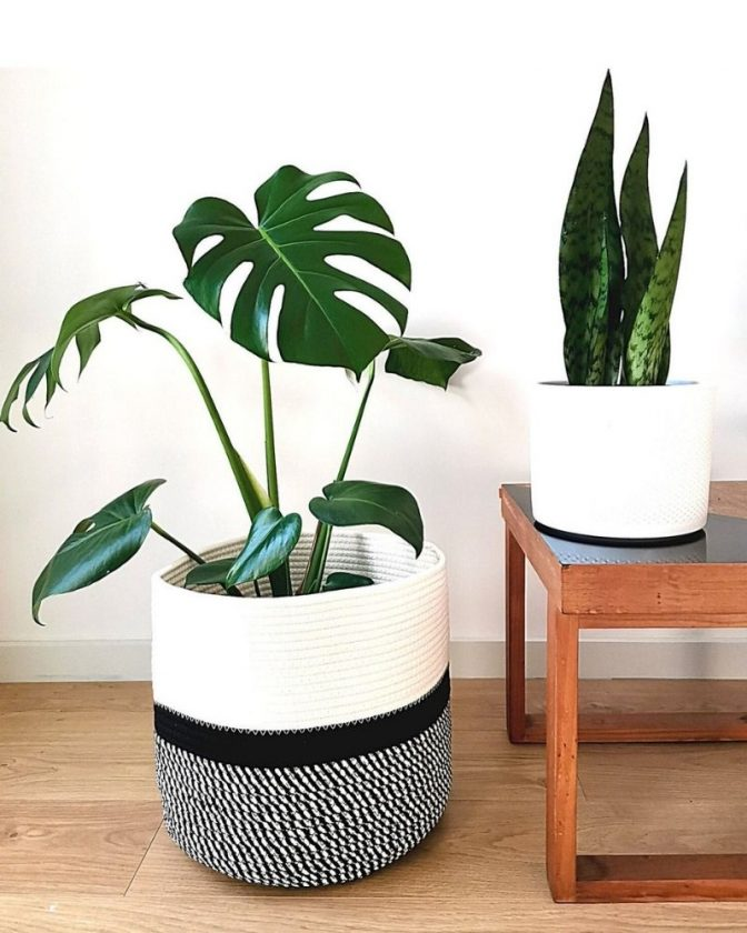 Sustainable planters made from eco-friendly materials